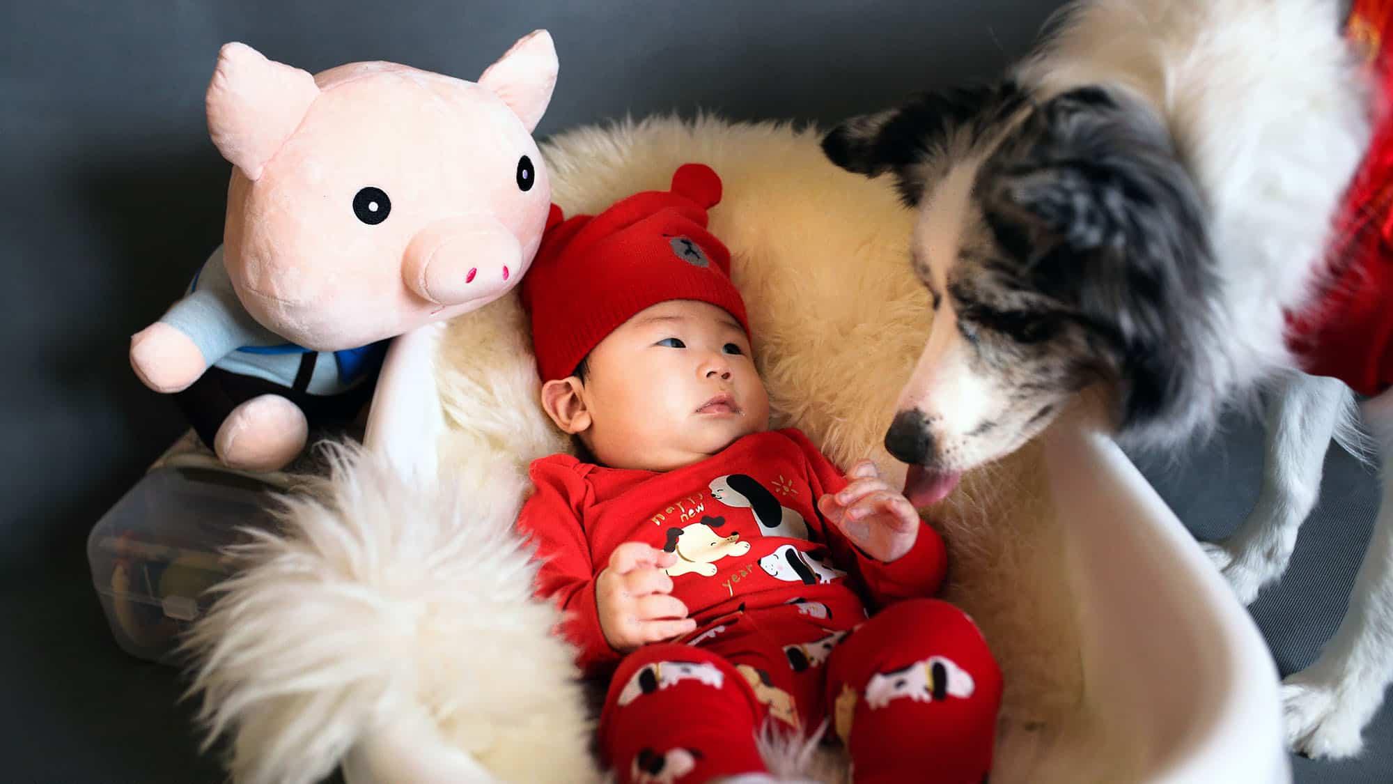 Cómo presentarle al perro al bebé - 2