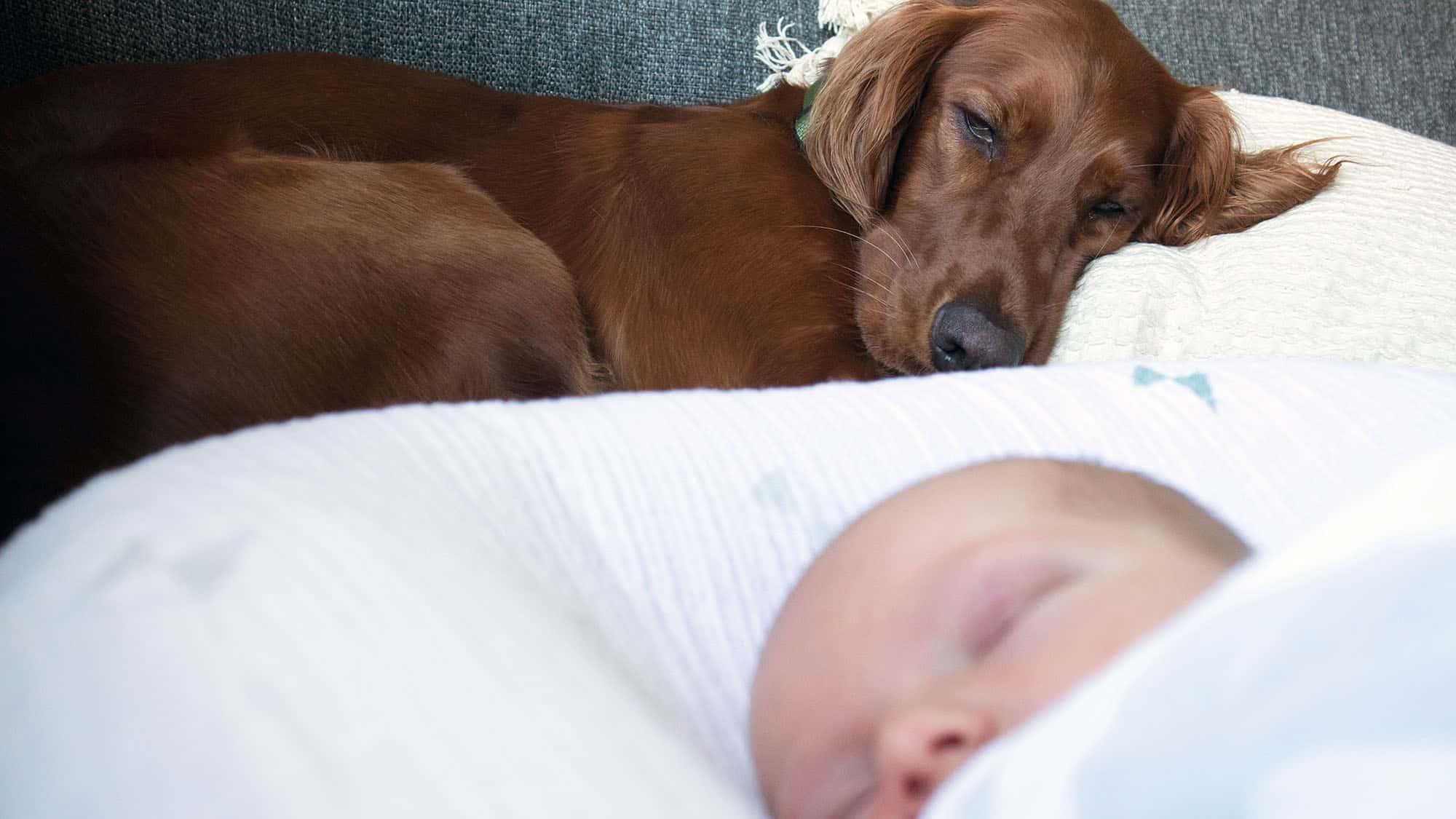 Cómo presentarle al perro al bebé - 3