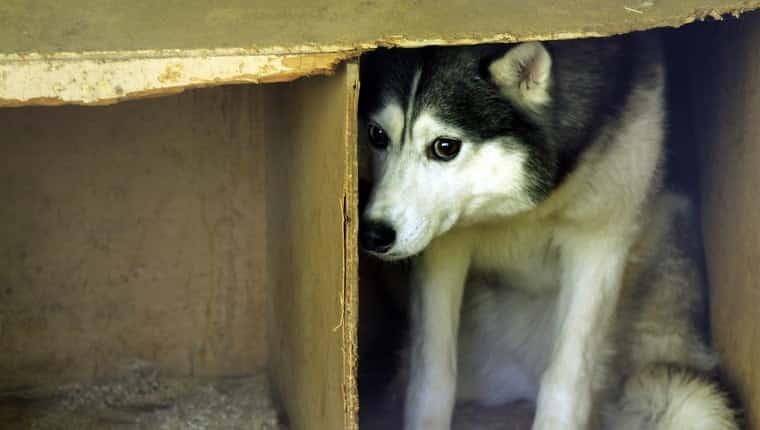 perro callejero asustado