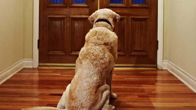 perro esperando en la puerta