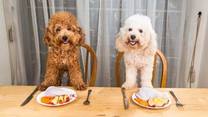 perros en la mesa de la cena