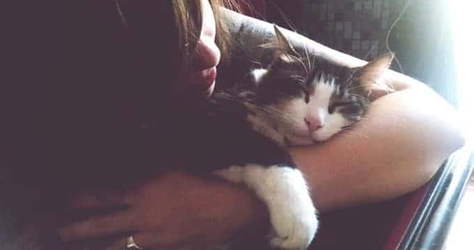 Mujer cuidando gato soñoliento en casa