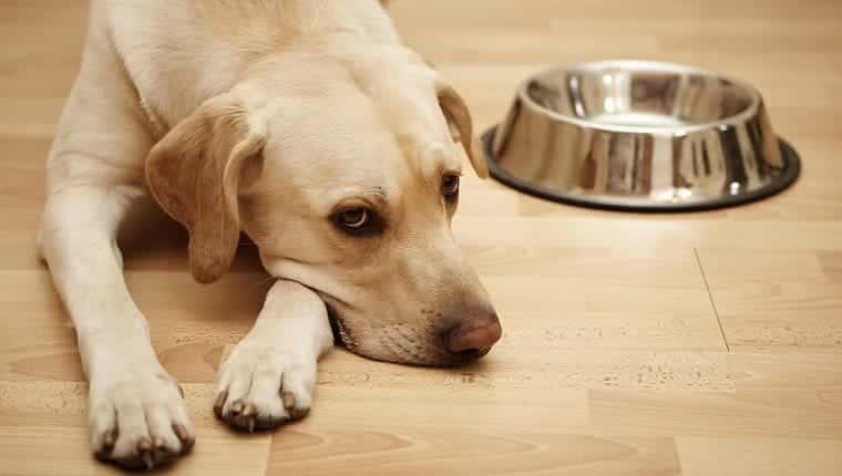 Un perro está acostado junto a un plato de comida vacío.