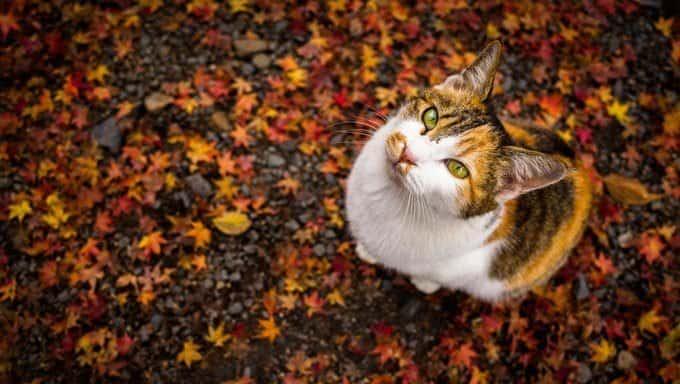 gato sentado en las hojas