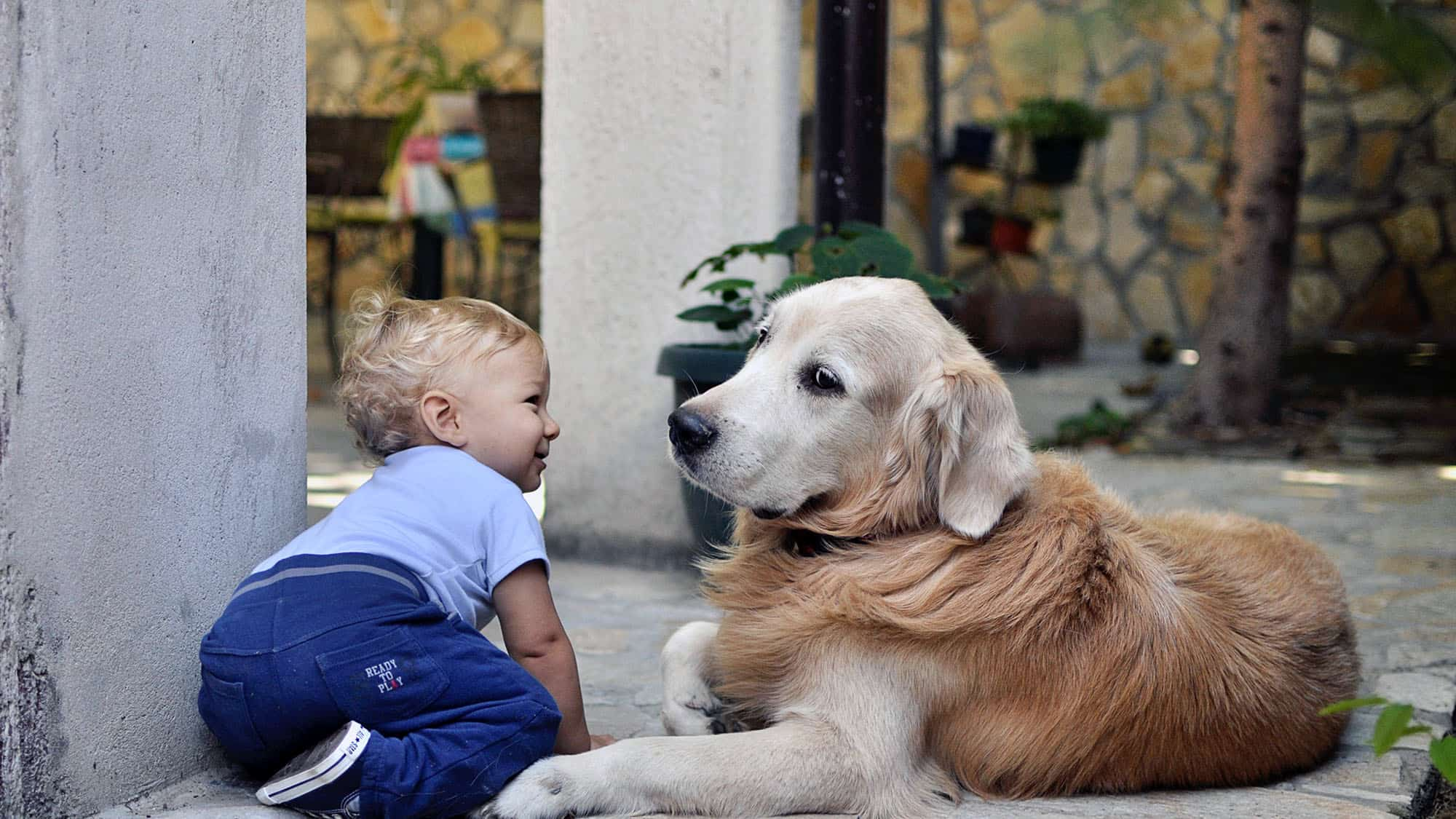 Cómo presentarle al perro al bebé - 1