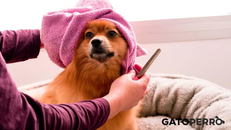 Como recortar las uñas de un perro