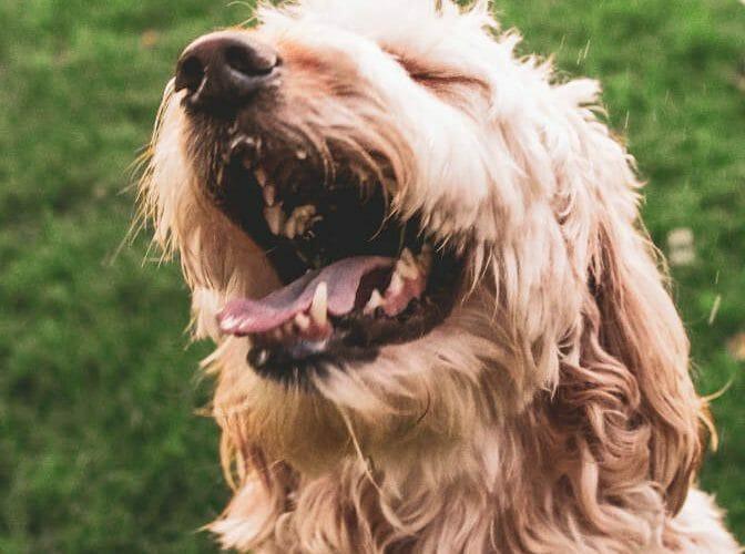 estornudo de perros