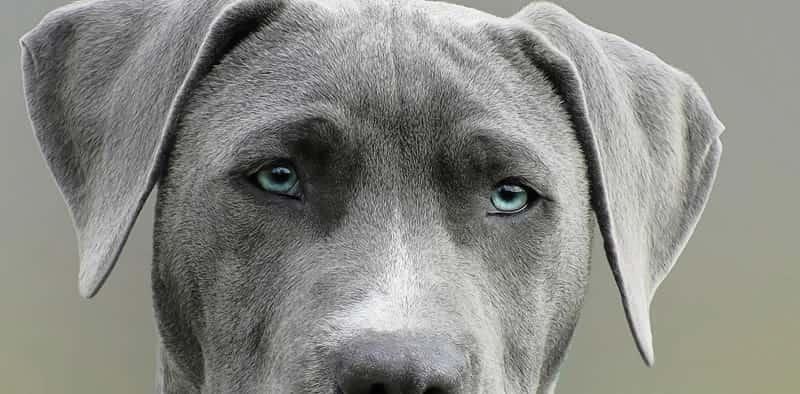 nombres para perros grises