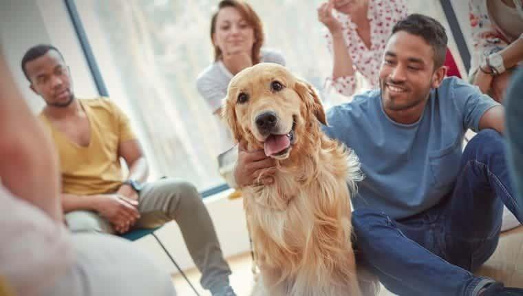 Hombre acariciar perro en sesión de terapia de grupo