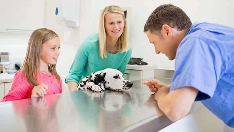Veterinario y dueños examinando perro en la oficina del veterinario