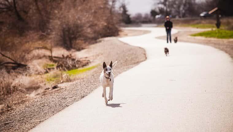 Caminando sin correa