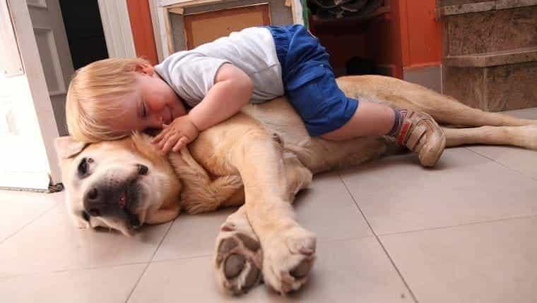 Dejar perros desatendidos con nuevos humanos o animales