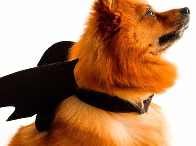 nombres de perros super heroes