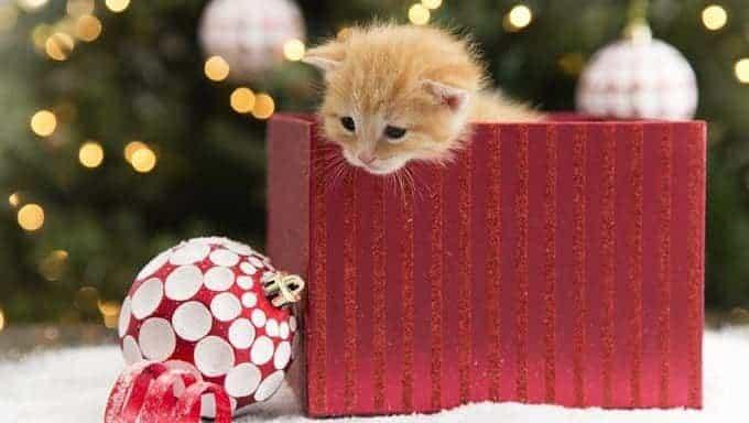 gatito en caja de regalo de navidad