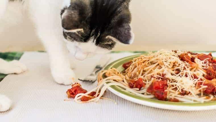 Gato comiendo fideos