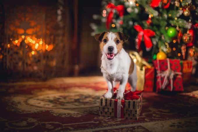 Los árboles de Navidad están llenos de peligros