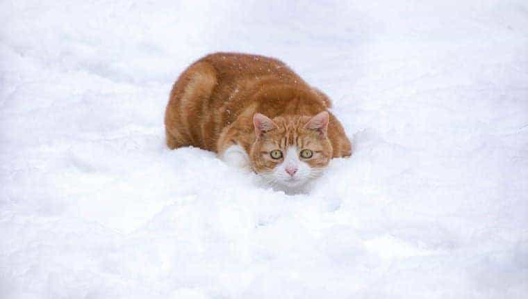 Gato en cuclillas en la nieve.