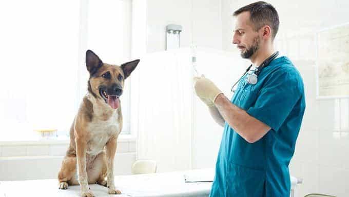 veterinario con perro en mesa médica