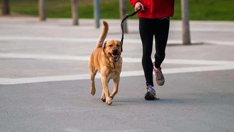 Mascota y dueño conectados.  Hombre corriendo junto a un perro en un parque urbano.