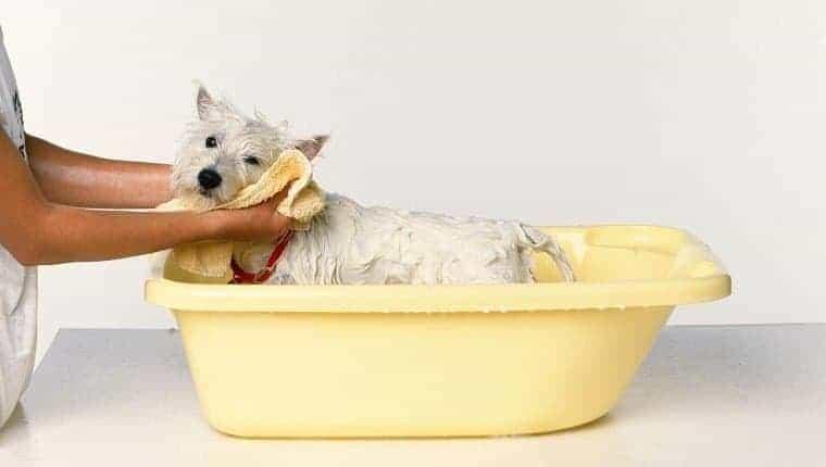 Un perro se seca con una toalla.
