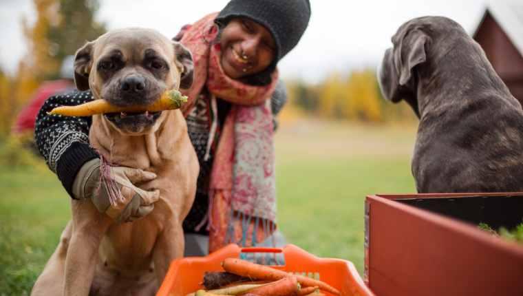 Zanahorias para perros 2