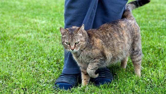 gato frotando su pierna