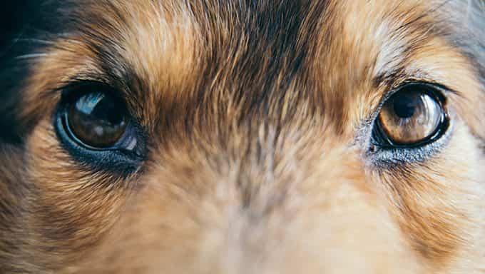 cierra los ojos de los perros