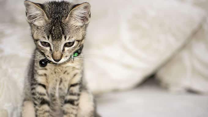El gato triste puede tener un trastorno afectivo estacional.