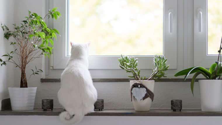 Mantenga a su gato adentro