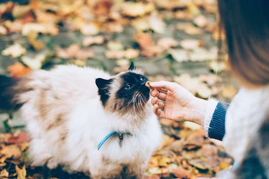 gato en hojas comiendo golosinas