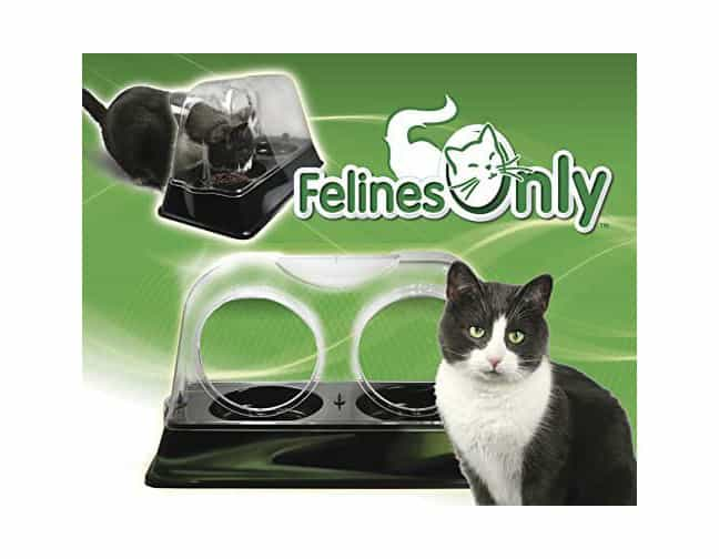 Plato para gatos Felines Only Purrrfect