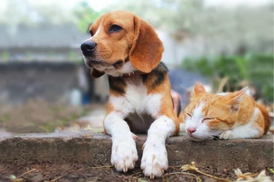 Caja de arena a prueba de perros