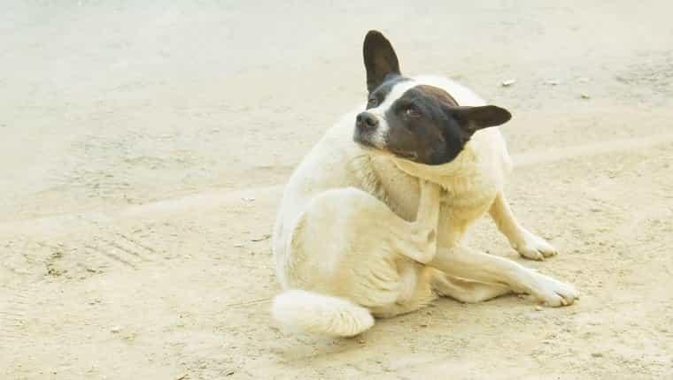 Perro callejero rayado en la calle de la ciudad.