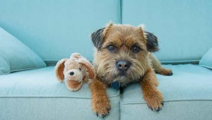 perro en sofá con animal de peluche