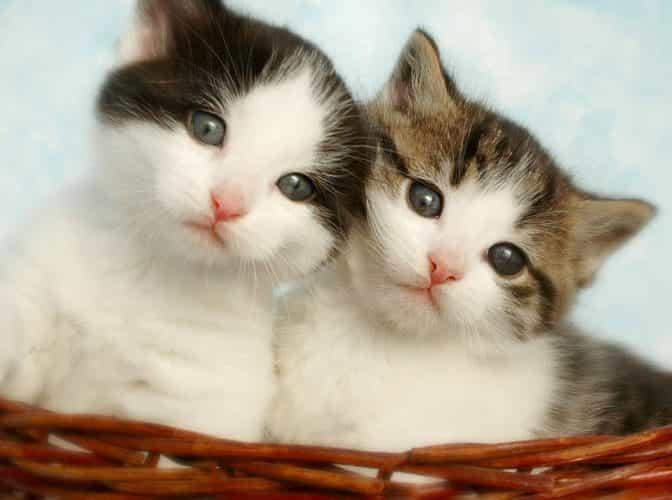 gatitos gemelos