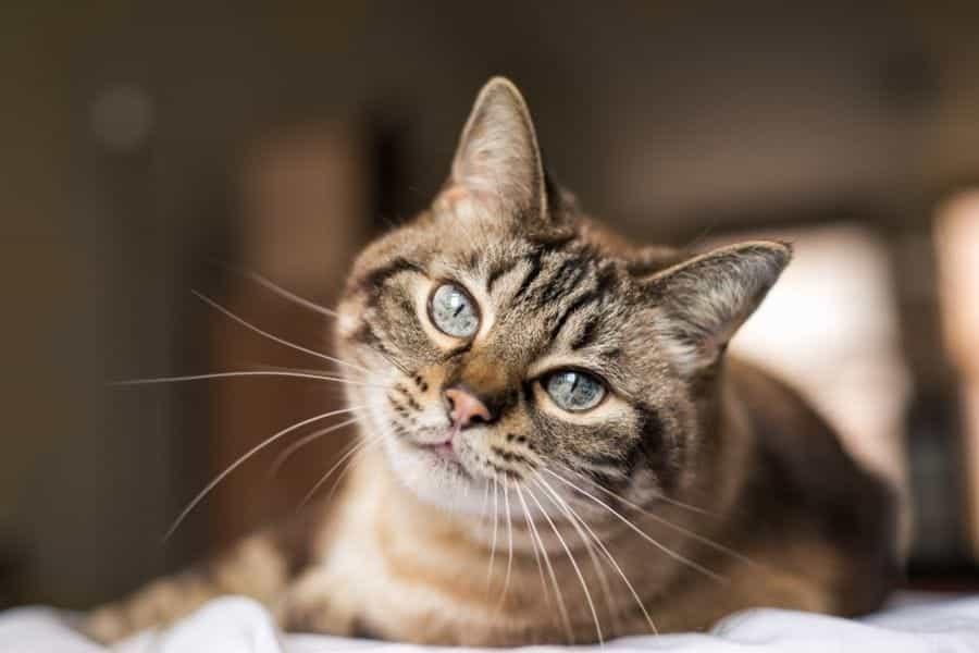 Cómo hacer que un gato se sienta cómodo en una casa nueva
