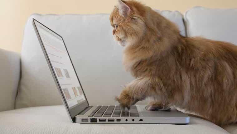 Haz excelentes reseñas en línea