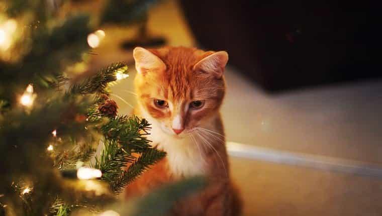 Tarjetas y fotos navideñas