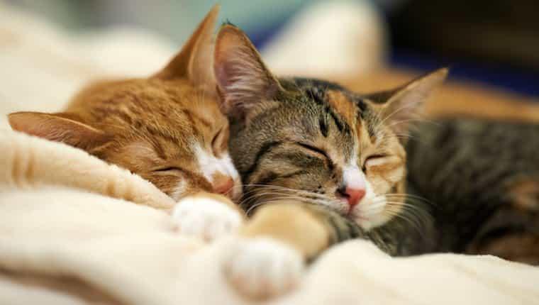 Dos gatos durmiendo