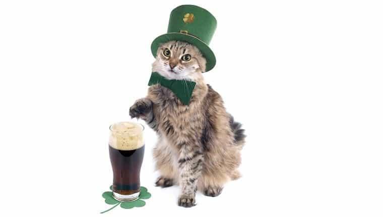 Gato del día de San Patricio con cerveza