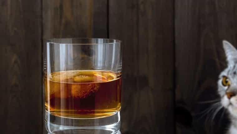 Bebida fría.  Un vaso lleno de bebida y hielo.  Observando al gato.  Fondo de madera marrón oscuro.