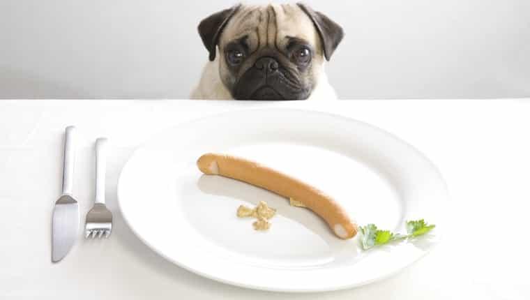 Pug joven posando detrás de un plato con una salchicha