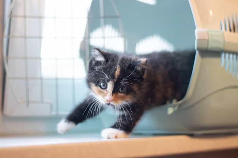 Un gatito sale de su jaula.