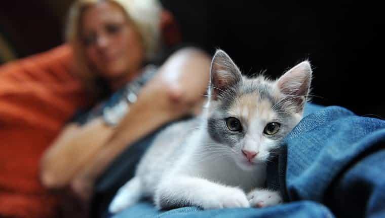 """""""Primer plano de un gato, recostado cómodamente y calentito sobre las piernas de una mujer""""."""