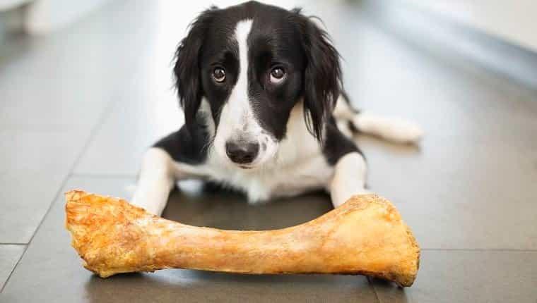 Perro comiendo hueso en el suelo