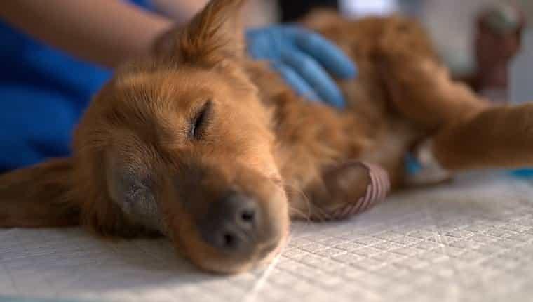 El joven cachorro Stid fue salvado de la calle y llevado a los veterinarios para ser examinado y salvado, y luego entregado a un animal amoroso.