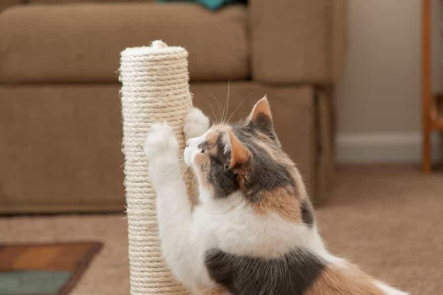 Las mejores selecciones para postes rascadores para gatos