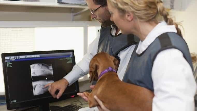 Veterinarios examinando radiografías en la oficina.