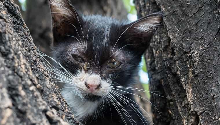 Gatito blanco y negro con un poco de miedo e impuros ojos sucios en el árbol, enfoque selectivo en su ojo