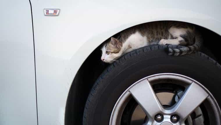 Gato sentado en un neumático de coche